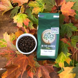 Sugar-maple-coffee-leaves-72-dpi